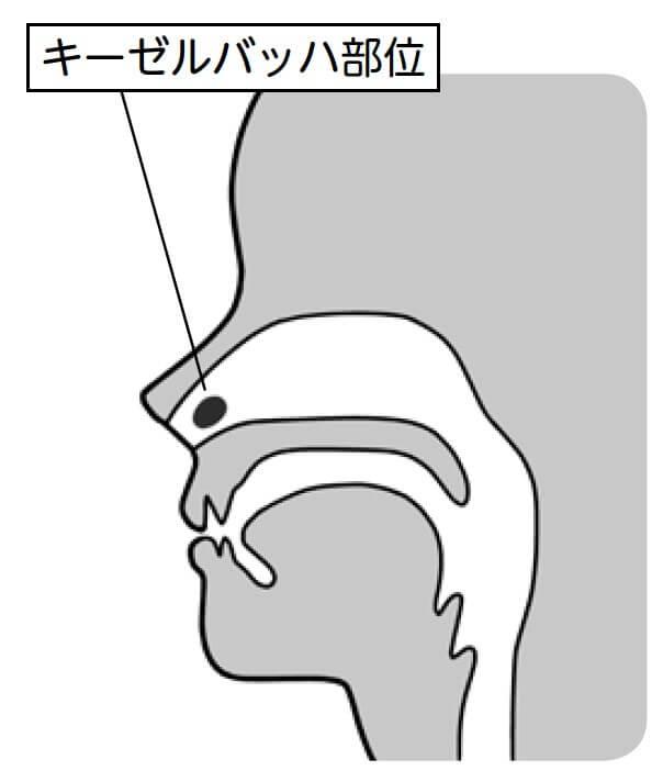 鼻血が止まらない!専門医の教える適切な鼻血の止め方の画像1