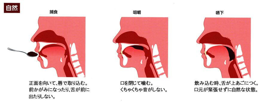 【医師が教える】離乳食の正しい食べさせ方が、生涯の噛む力を育てる!の画像1