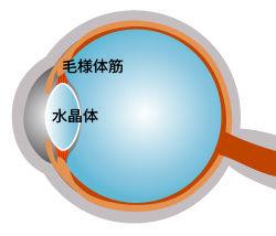 老眼はトレーニングで改善するのか?眼科専門医が答えますの画像1