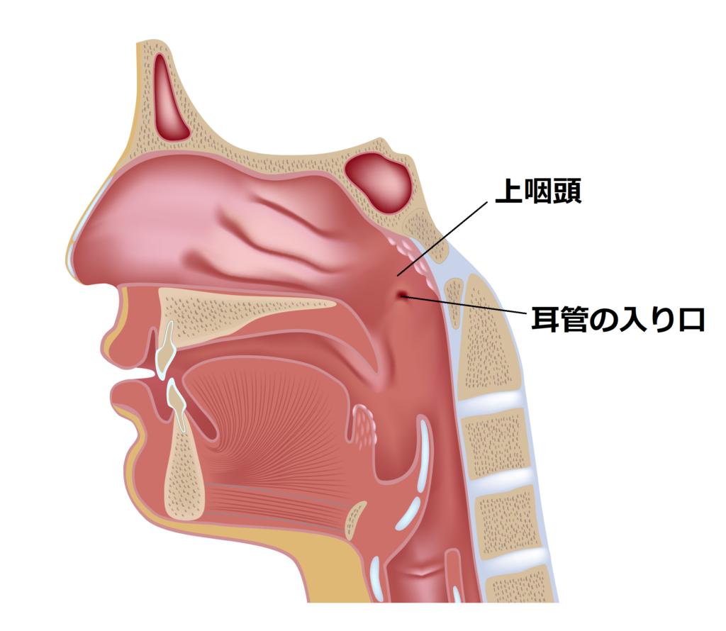 花粉症で鼻水が止まらない!鼻水の正しいかみ方を耳鼻科専門医が教えますの画像1