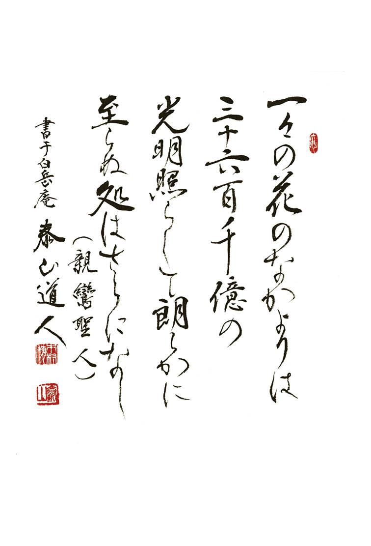 『親鸞聖人の花びら』を試し読みの画像12