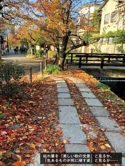 歎異抄の旅⑳[京都編]哲学の道と『歎異抄』の画像5